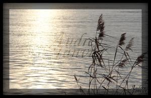 Eau Garonne02©Photo Audrey Janvier