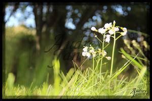 Fleur02©Photo Audrey Janvier