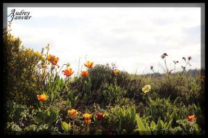 Fleurs01©Photo Audrey Janvier