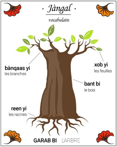 Jàngal Apprends le vocabulaire de l'arbre, en wolof